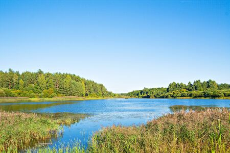 rivulet: Beautiful landscape with the wood, the lake and the rivulet in Pushkin Hills, Pskov region, Russia