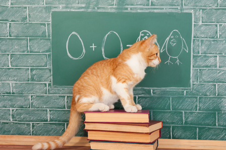 capable of learning: Education funny idea about red cat studying arithmetic on sample of addition of eggs