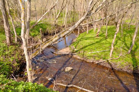 wilds: Spring. Fairy wilds around the serpentine creek Stock Photo