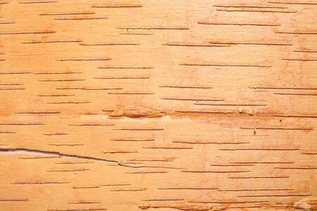 birchbark: Birch cork natural texture background