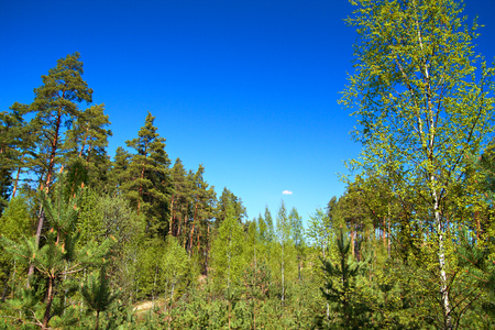 View of the spring forest
