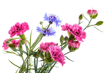 Bouquet of garden flowers isolated on a white background Stock Photo