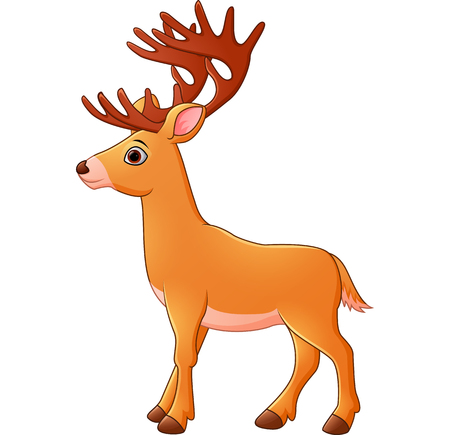 white tail deer: Cartoon deer Illustration