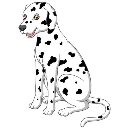 dalmatian: cute and adorable dalmatian dog sitting on floor Stock Photo