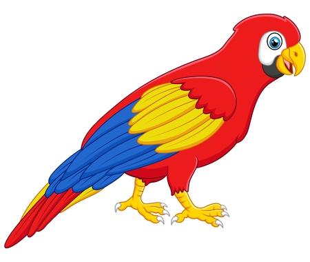 macaw: Cute macaw bird cartoon posing Stock Photo