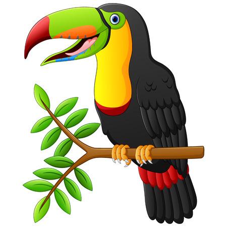 Tukan Cartoon sitzt auf dem Zweig