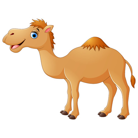 Cute camel cartoon Illustration