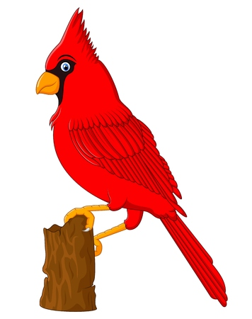 talons: Red Cardinal sitting on a tree branch Illustration