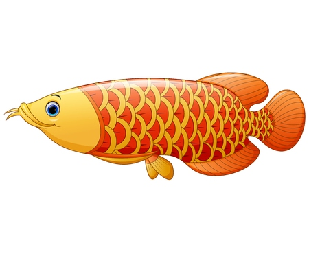arowana: Arowana fish Illustration