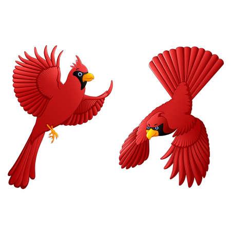 chirp: cardinal cartoon set
