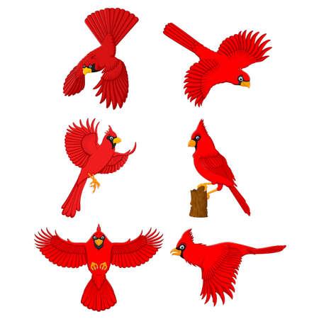 finch: cardinal cartoon set