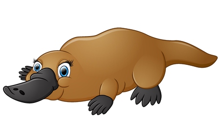 one animal: Happy platypus isolated on white background