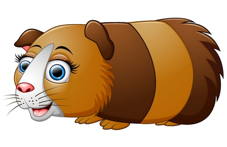 guinea pig: Cartoon guinea pig isolated on white background