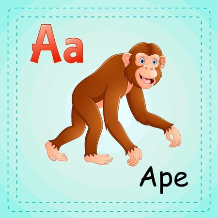 ape: Animals alphabet: A is for Ape