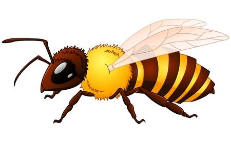 wasp: Vector illustration of Cartoon wasp