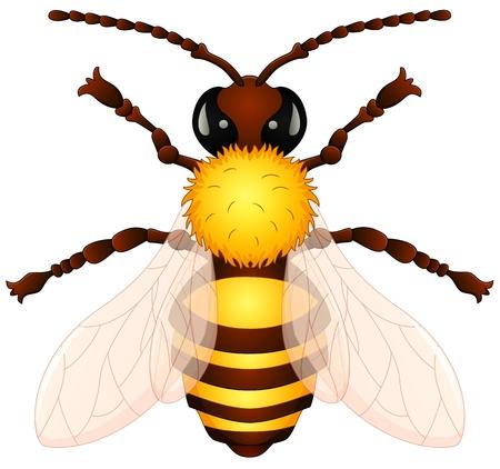 wasp: Cartoon wasp Illustration