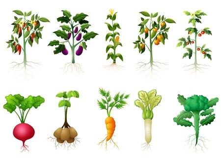 Vector illustratie van veel aardige planten van groenten met wortels illustratie Stock Illustratie