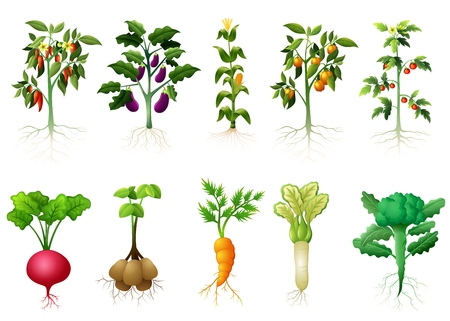 Vector illustration of Many kind plant of vegetables with roots illustration