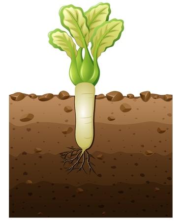 Vector illustratie van witte radijs planten met wortels onder de grond illustratie Stock Illustratie