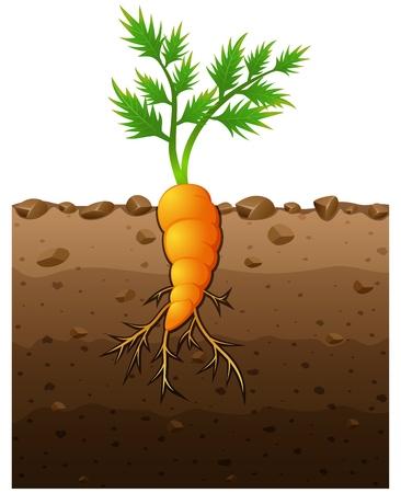 Vector illustratie van de Wortel plant met wortels onder de grond illustratie