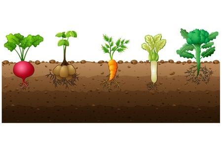 Vector illustration of Different kind of vegetables illustration