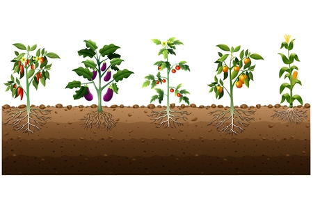 Vector illustration of Various kinds of plants growing in the garden