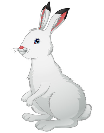 rabbit standing: Illustration of Cute white rabbit on a white background
