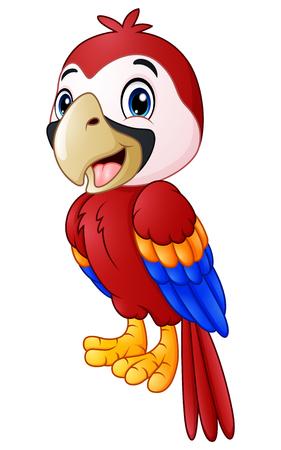 macaw: Funny macaw bird cartoon