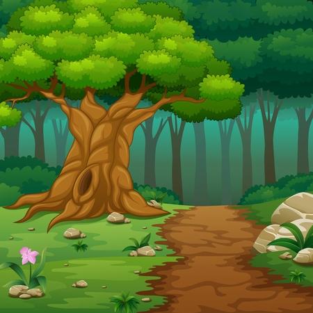 Priorità bassa della foresta con la strada sterrata