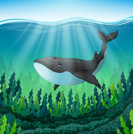 Vector illustration of Cartoon whale swim in the sea Illustration