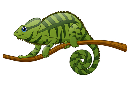 Vector illustration of Cartoon chameleon on a branch