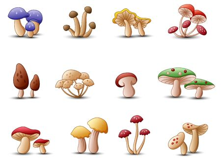 Different types of mushrooms on a white background Banco de Imagens