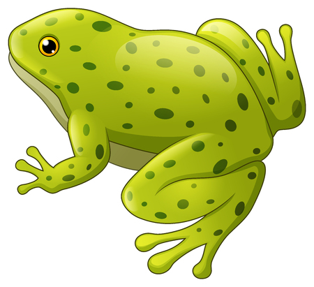 Vector illustration of Green spotted frog isolated on white background