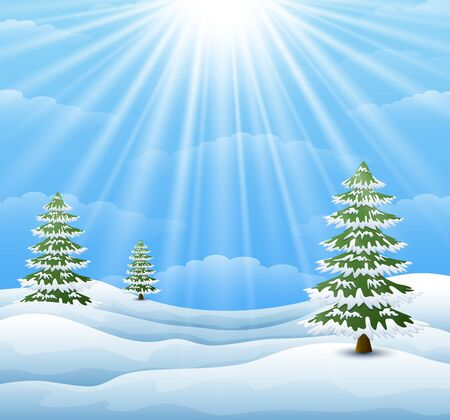 wintery: Winter landscape with pine tree and sunlight background