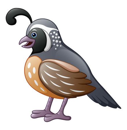 かわいいウズラの鳥の漫画  イラスト・ベクター素材