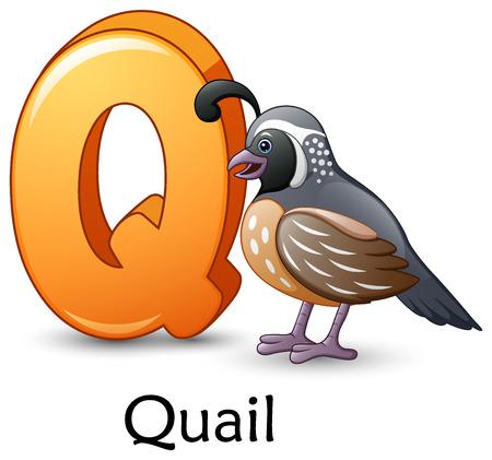 Letter Q with Quail bird
