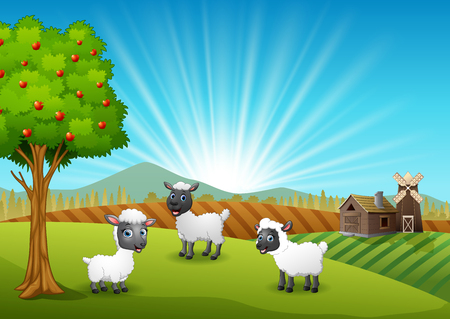 Happy three sheeps in farm background