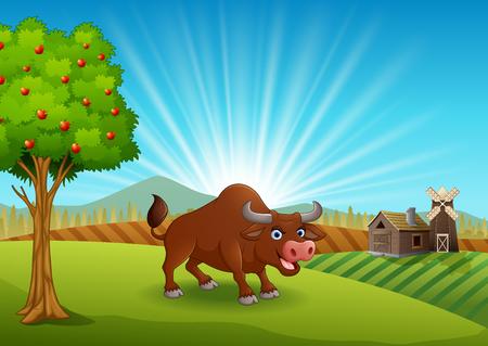 Bull activity at farm in the morning
