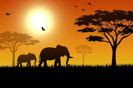 Silhouette of elephant in the savanna