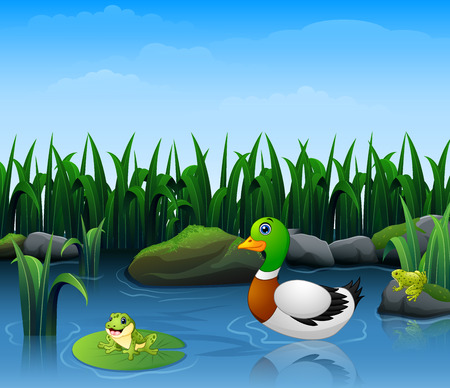 Ducks swim with frogs in the river  イラスト・ベクター素材