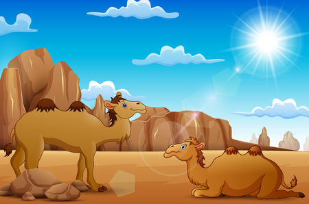 Cartoon Camels living in the desert 向量圖像