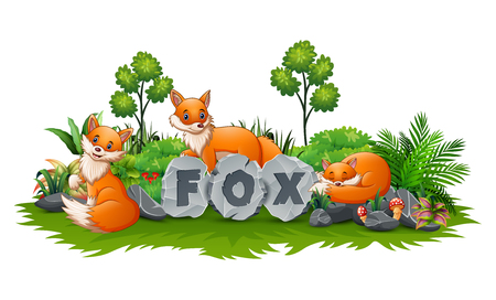 Fox are playing in the garden