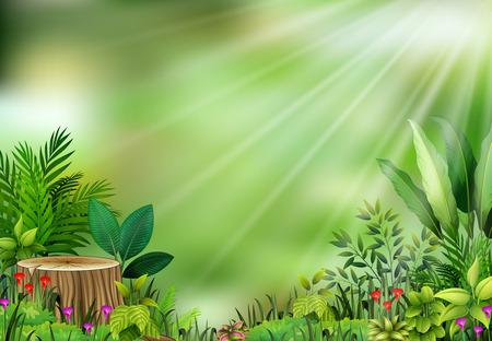 Botanical plant view on sun light 일러스트