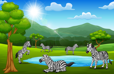 The zebras are enjoying nature in beautiful fields Vector Illustration