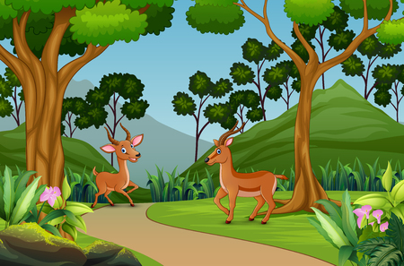 Cute two gazelle playing in the jungle