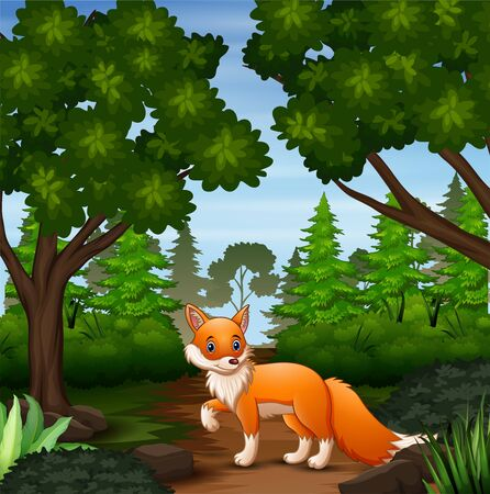 A fox looking for prey at forest scene