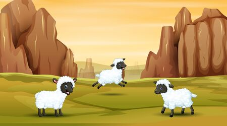 Three sheep playing on the field
