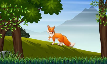 A fox looking for prey on the hill Ilustração