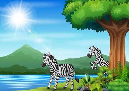 Two zebra playing in the jungle