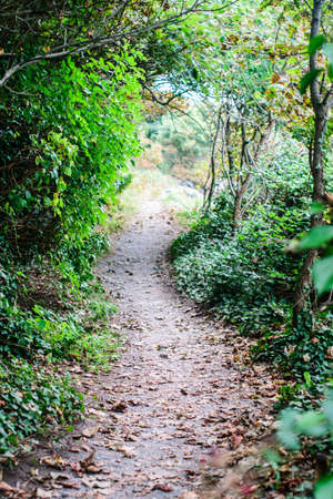 Winding Path in Ireland. Stock fotó